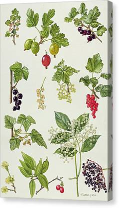 Currants And Berries Canvas Print by Elizabeth Rice