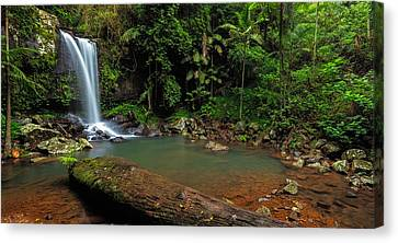 Curtis Falls - Mt Tamborine Canvas Print by Mark Lucey