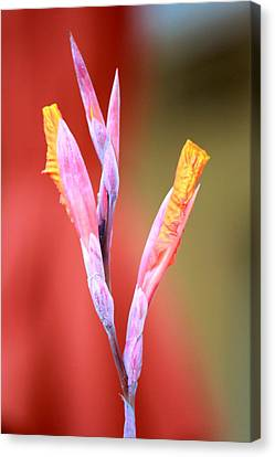Cusp Of Emergence Canvas Print by Leigh Meredith