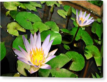 Cute Blue Lotus Canvas Print by Dumindu Shanaka