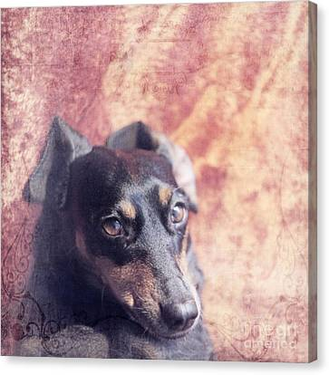 Cute Daschund Canvas Print by Angel  Tarantella