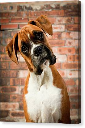 Cute Dog Canvas Print by Danny Beattie Photography