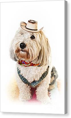 Overalls Canvas Print - Cute Dog In Halloween Cowboy Costume by Elena Elisseeva
