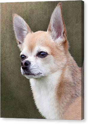 Canvas Print featuring the photograph Cute Fawn Chihuahua Dog by Ethiriel  Photography