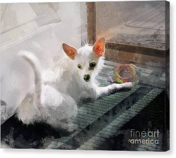 Cute Little Maggie May Canvas Print