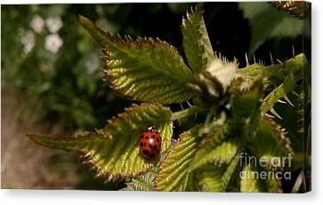 Cute Red Ladybug  Canvas Print by Garnett  Jaeger