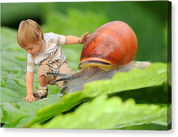 Cute Tiny Boy Playing With A Snail Canvas Print by Jaroslaw Grudzinski