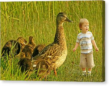 Cute Tiny Boy Playing With Ducks Canvas Print