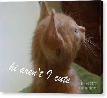 Canvas Print featuring the photograph Cutest Kitty Ever by Garnett  Jaeger