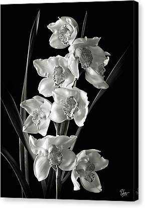 Canvas Print featuring the photograph Cymbidium Cluster In Black And White by Endre Balogh