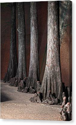 Cypress Canvas Print by Greg Kopriva