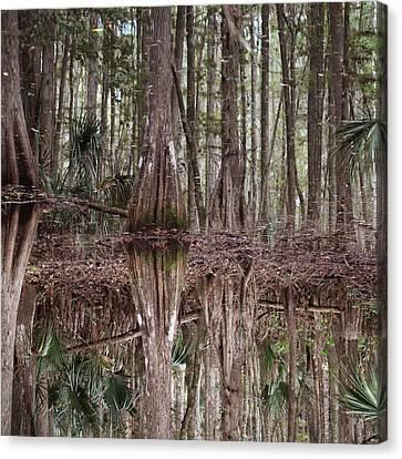 Cypress Hammock Canvas Print by Joseph G Holland