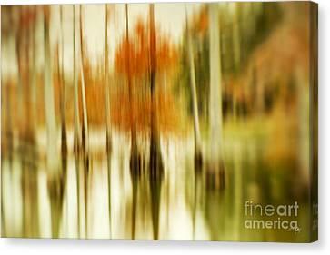 Cypress Morning Canvas Print by Scott Pellegrin