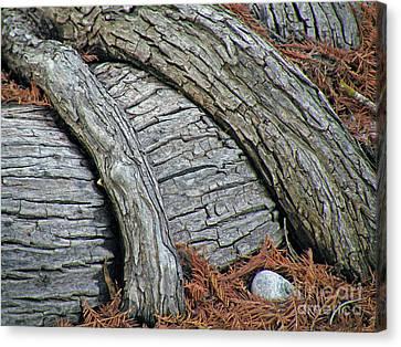 Cypress Overpass Canvas Print
