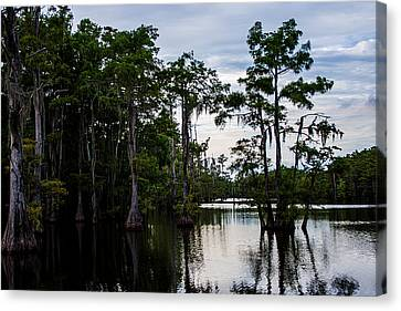 Canvas Print featuring the photograph Cypress Swamp In Louisiana by Ester  Rogers