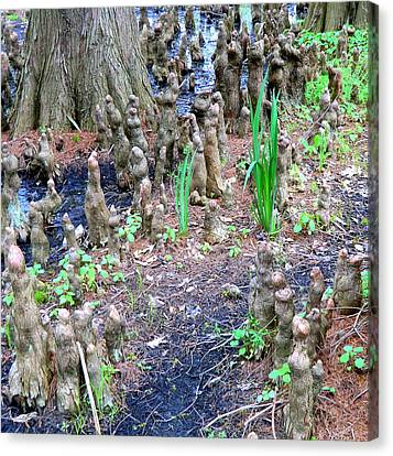 Cypress Swamp Land Canvas Print by Mindy Newman
