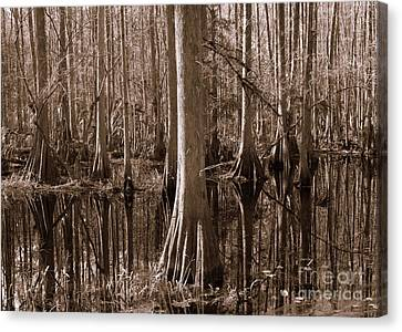 Cypress Swamp Reflection In Sepia Canvas Print by Carol Groenen