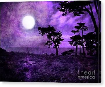 Cypress Trees At Sutro Heights Canvas Print by Laura Iverson