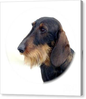Dachshund 847 Canvas Print by Larry Matthews
