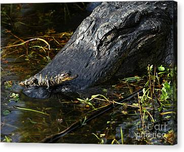 Daddy Alligator And His Baby Canvas Print by Sabrina L Ryan