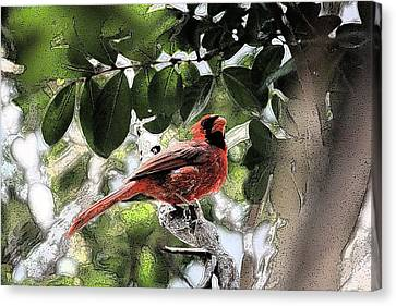 Canvas Print featuring the photograph Daddy Cardinal by Donna G Smith