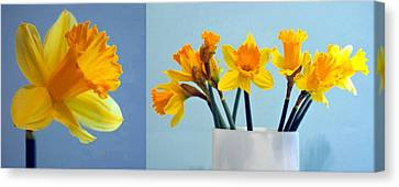 Daffodils Canvas Print by Cathie Tyler