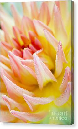 Dahlia Flower 04 Canvas Print by Nailia Schwarz