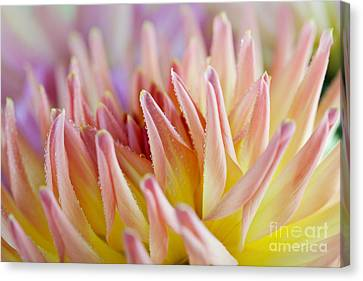 Pastel Canvas Print - Dahlia Flower 05 by Nailia Schwarz