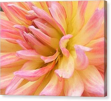 Dahlia Glow Canvas Print