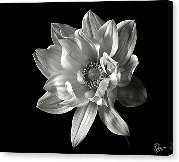 Dahlia In Black And White Canvas Print