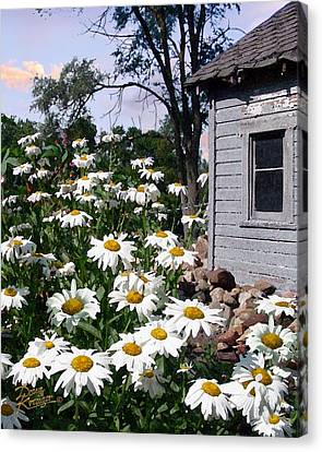 Daises Delight II Canvas Print by Doug Kreuger