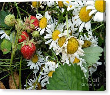 Canvas Print featuring the digital art Daisies And Strawberries by Vicky Tarcau