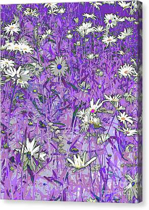 Daisies Canvas Print by Anne Havard