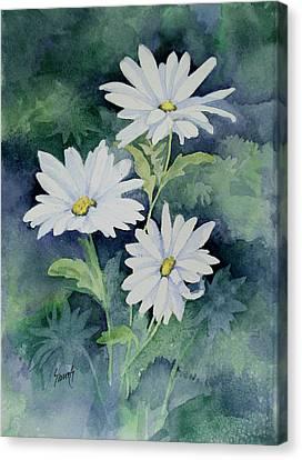 Daisies II Canvas Print by Sam Sidders