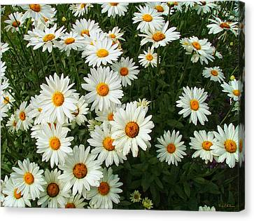 Canvas Print featuring the photograph Daisies by Wendy McKennon