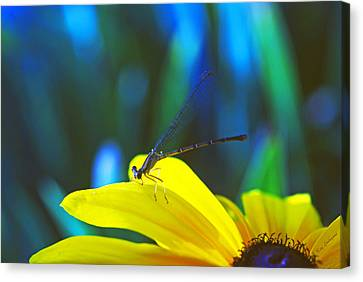 Canvas Print featuring the photograph Daisy And Dragonfly by Kay Lovingood