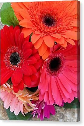 Daisy Bouquet Canvas Print by Lynnette Johns
