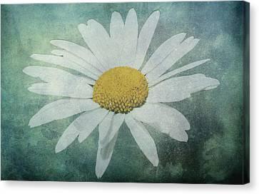 Daisy Canvas Print by Dawn OConnor