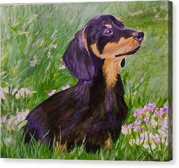 Daisy In Clover Canvas Print