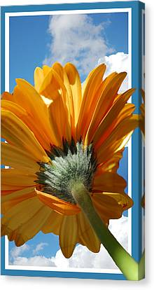 Daisy In The Sky Canvas Print by Rozalia Toth