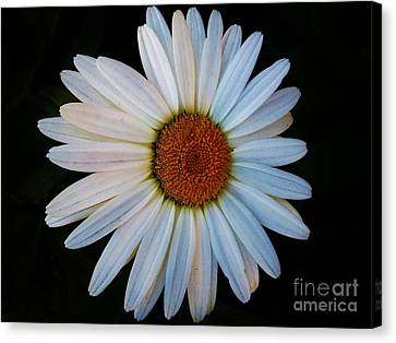 Canvas Print featuring the photograph Daisy by Jasna Gopic