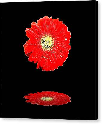 Canvas Print featuring the photograph Daisy Reflection by Carolyn Repka