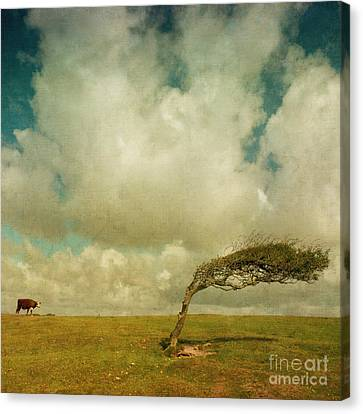 Daisy Spots A Tree Canvas Print by Paul Grand
