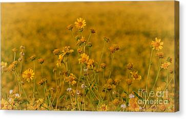 Daisy's Canvas Print by Donna Greene