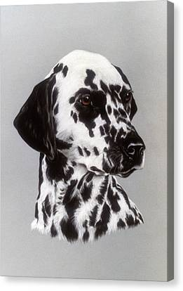 Dalmatian Canvas Print by Patricia Ivy