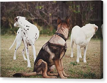 Dalmatian ,shepherd ,labrador Dog Canvas Print by S. I. Watson