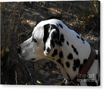 Dalmation Dog Canvas Print