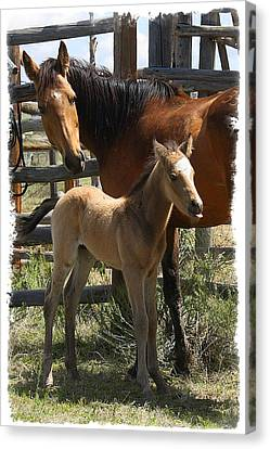 Canvas Print featuring the photograph Dam And Foal by Judy Deist