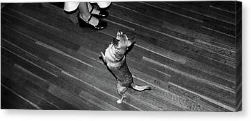 Dancing Dog  Canvas Print