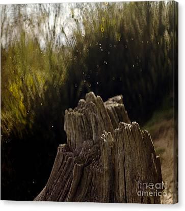 Dancing Flies Canvas Print by Angel  Tarantella